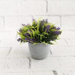 kwiaty w doniczce - lawenda